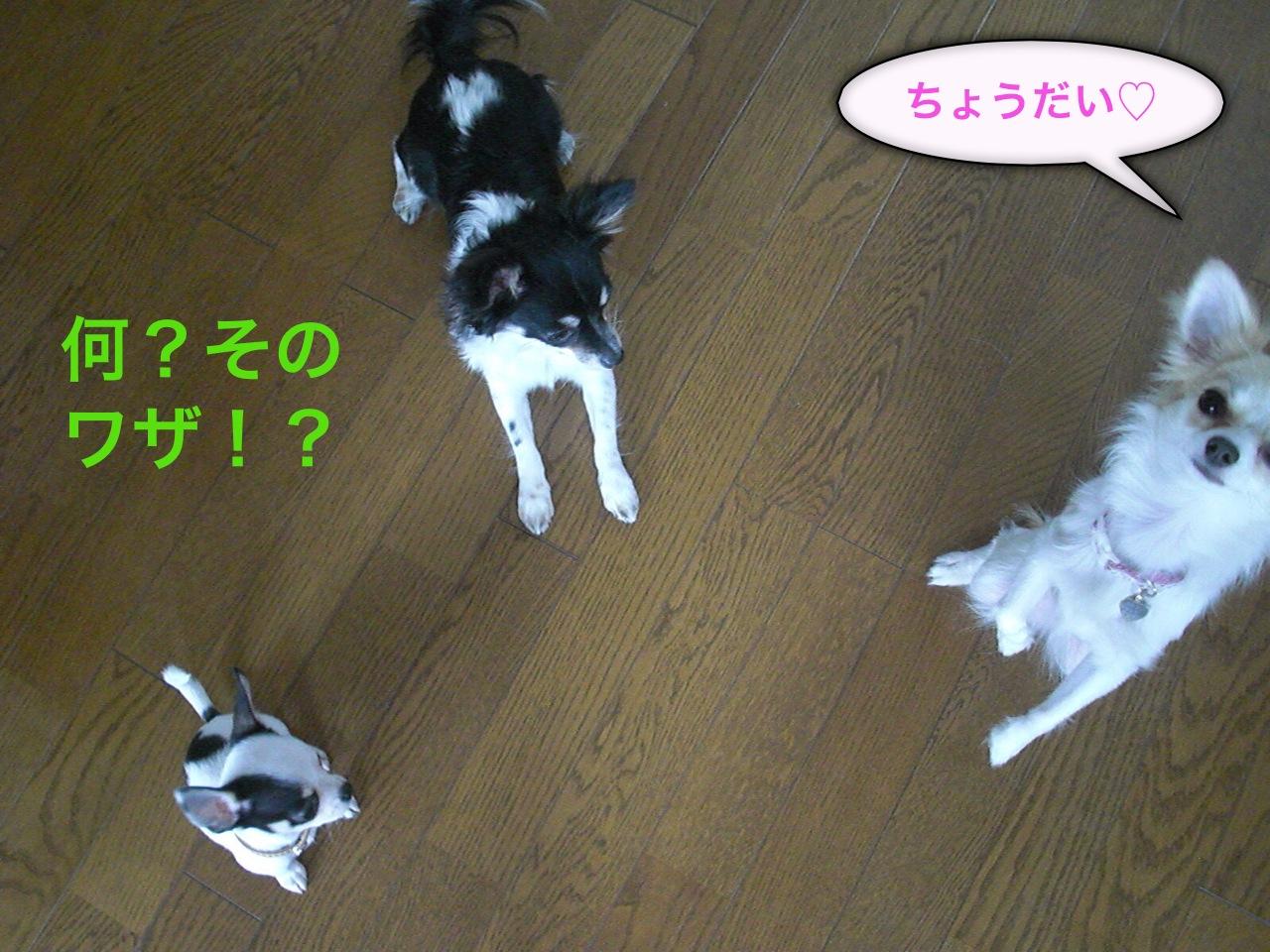 moblog_7412f459.jpg