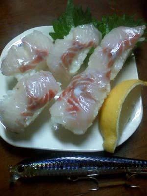 シーバス寿司2
