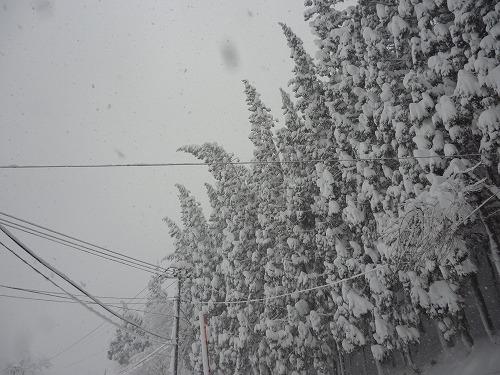 雪の重みで倒れそうな写真