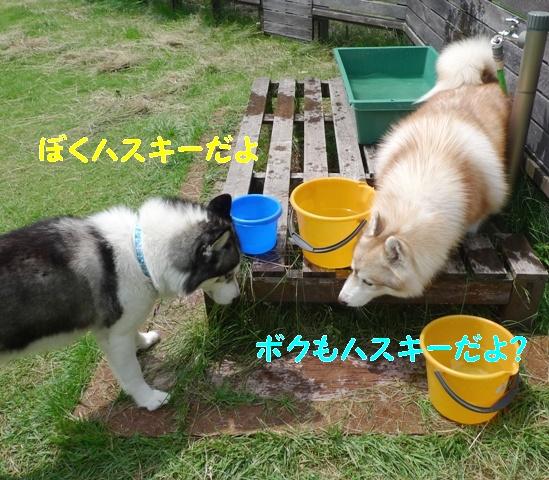 3ハスキー