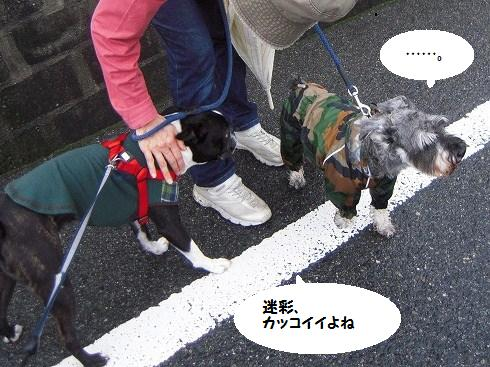 DSCN1974_20120625222616.jpg