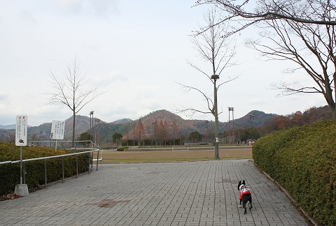 IMG_8134.jpg