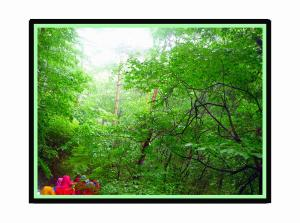 緑2011-06-16