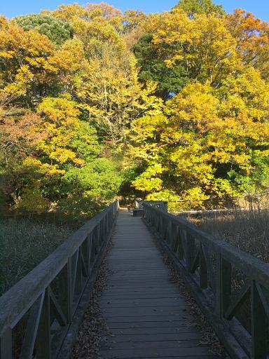 秋をわたる