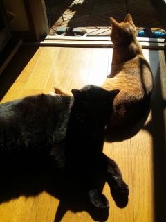 CAT5OLB4.jpg
