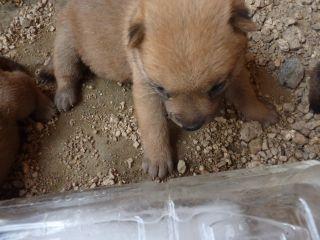 2010仔犬