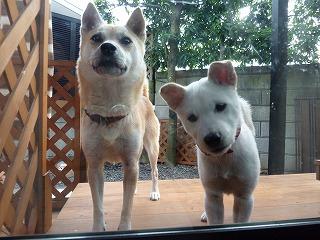 momo&nene