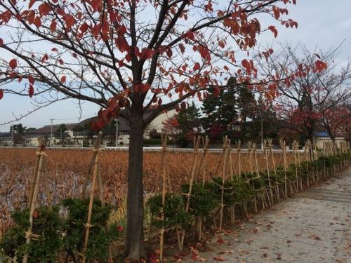 2014-11-12 外堀