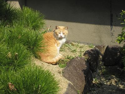 神社の猫さん2