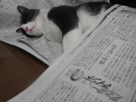 新聞のロール陸