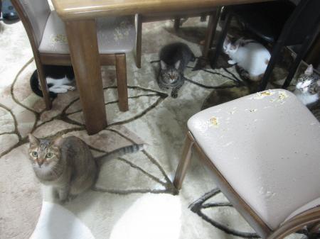出演多数の猫たち