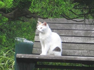 港の見える丘公園の猫さん