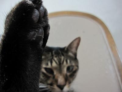 手か足か?