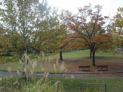 s-DSC09265.jpg