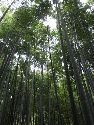 @11-01報国寺「竹の庭」