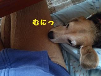 DSC_1779_201411192159173e8.jpg