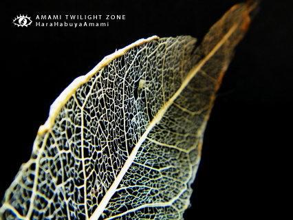 leaf04.jpg