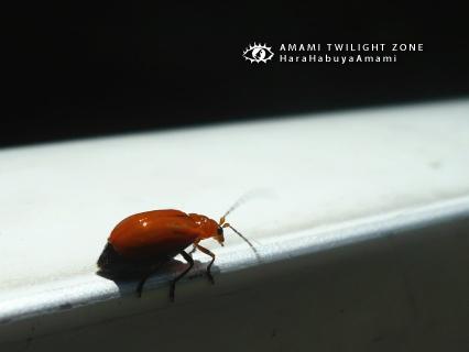 mushi28.jpg