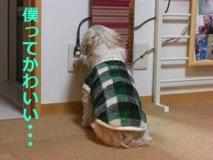 010_20120210205504.jpg