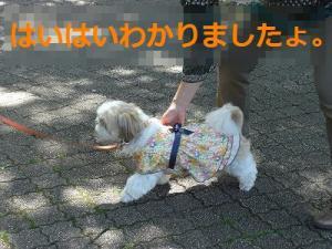 030_20120523202859.jpg