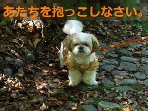 051_20120523202855.jpg