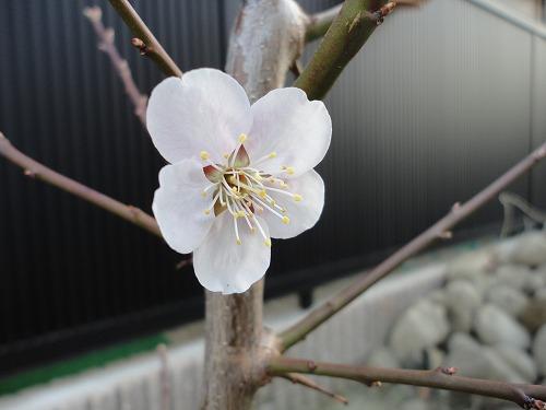 1104sinobu003.jpg