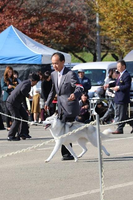 2014-11-16埼玉西クラブ連合会展-1