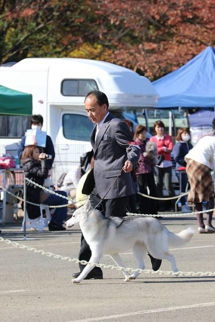 2014-11-16埼玉西クラブ連合会展-2