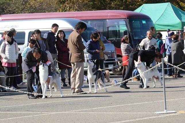 2014-11-16埼玉西クラブ連合会展-3