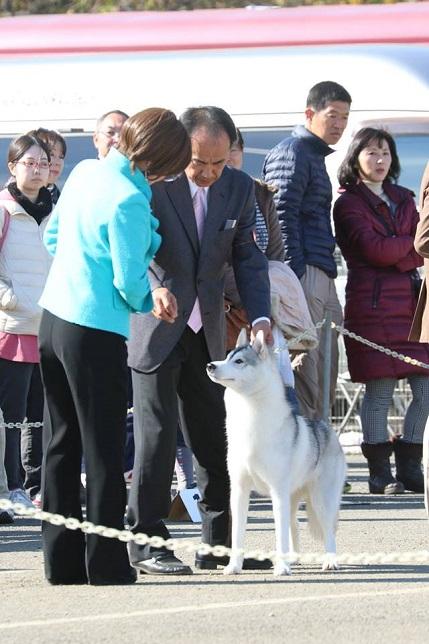 2014-11-16埼玉西クラブ連合会展-4