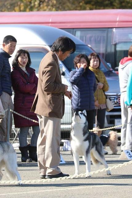 2014-11-16埼玉西クラブ連合会展-5