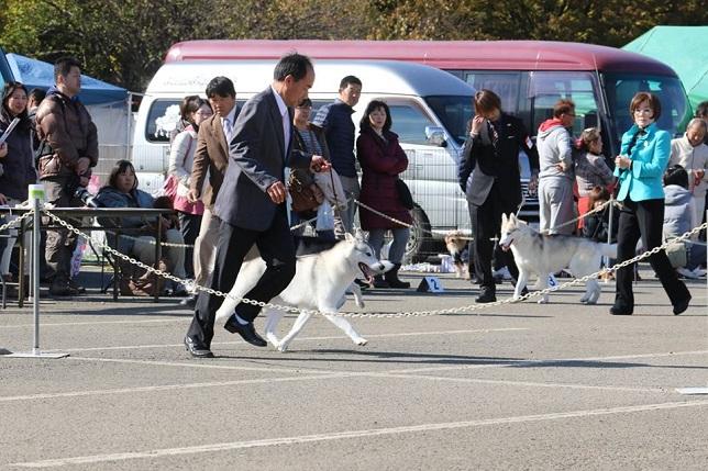 2014-11-16埼玉西クラブ連合会展-6