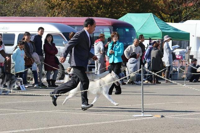 2014-11-16埼玉西クラブ連合会展-7