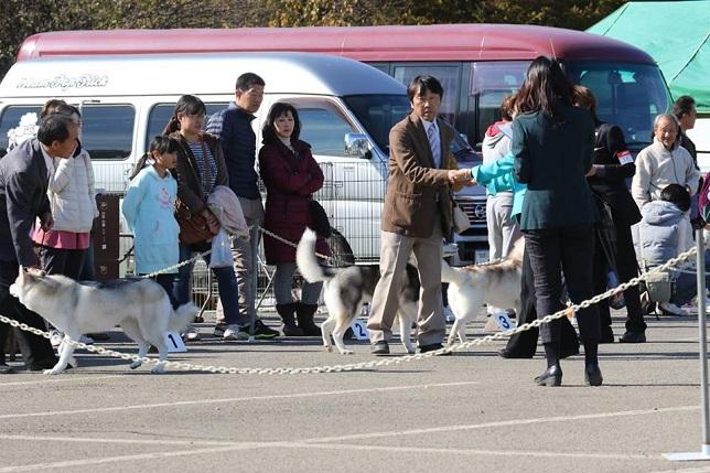 2014-11-16埼玉西クラブ連合会展-8