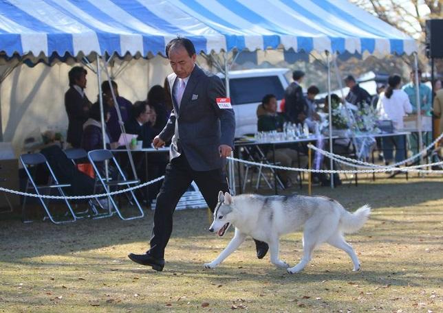 2014-11-23東京南ショードッククラブ展-2