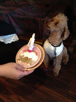 CoCoくん/Birthday Boy♪♪