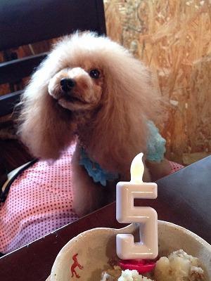サリーちゃん/Birthday Girlちゃん♪♪