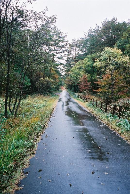 しっとり~雨あがりの道