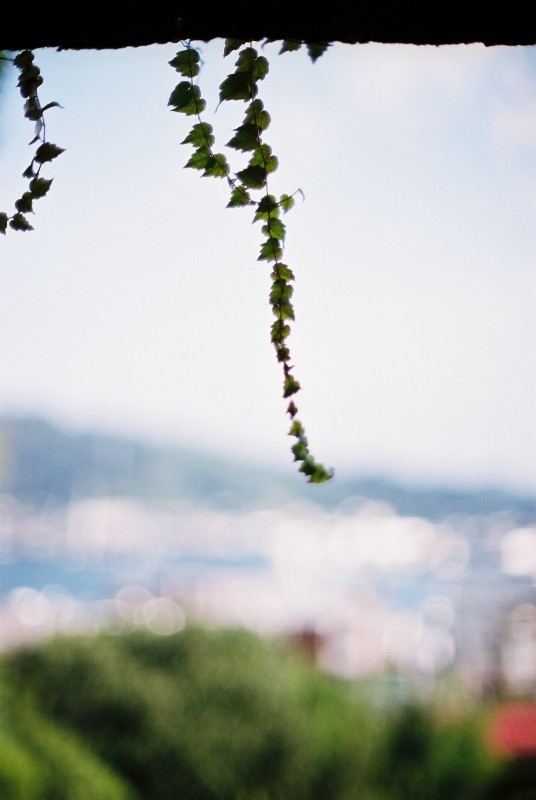 ハートの葉っぱがいっぱ~い(^^)