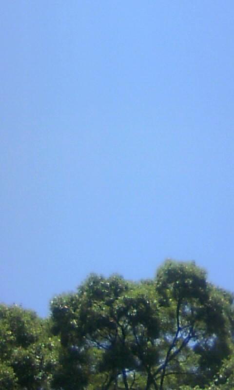 100624_120904快晴の空に榎木