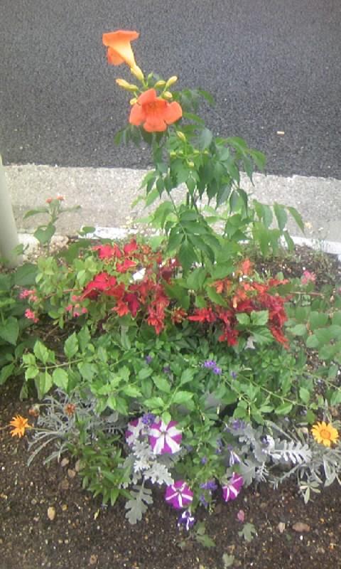 100702_141737道端の花