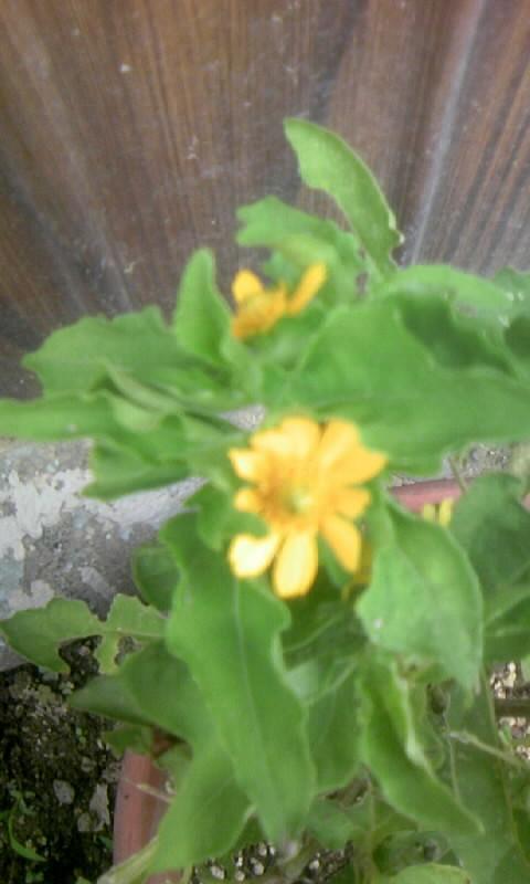 100805_114347何の花?
