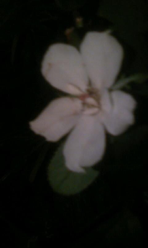100815_214033薔薇