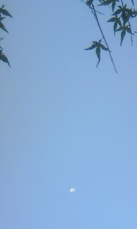 100831_062559朝の雲