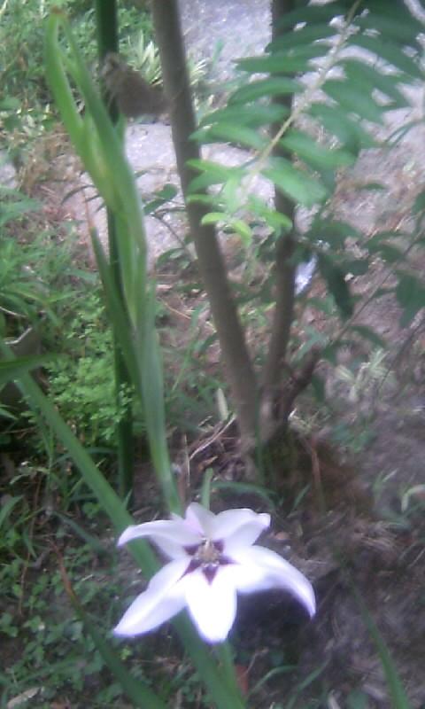 100907_061350アシダンテラと蝶