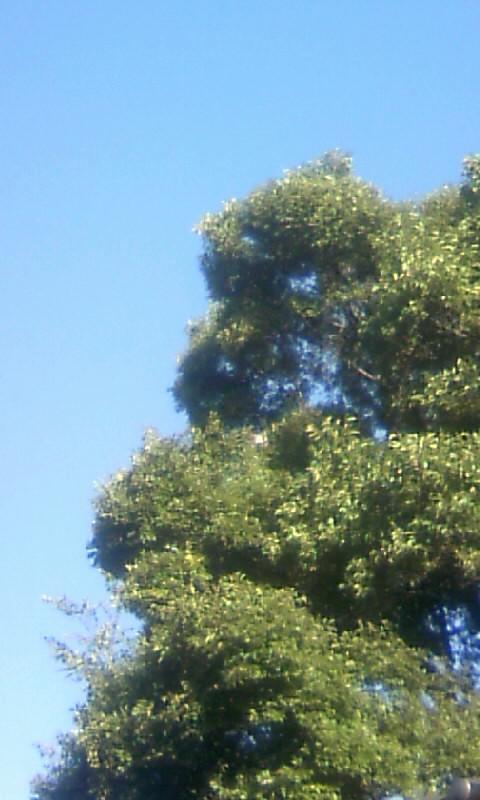 100929_073026榎木に鳥が