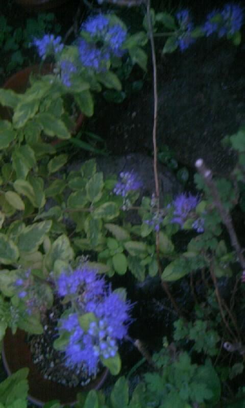 101002_055902段菊