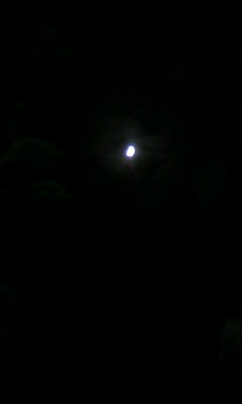 101015_191636上弦の月