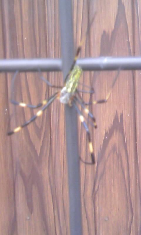 101020_094240蜘蛛