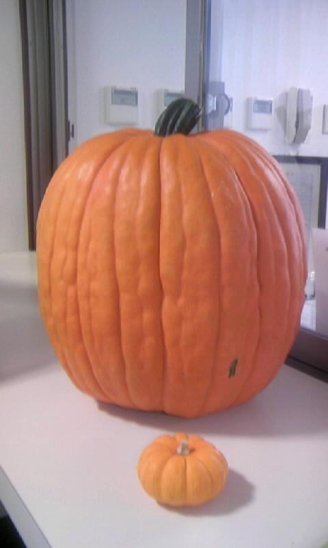 101024_134044飾りかぼちゃ